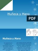 Muñeca y Mano