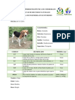 Mascota (Leidy Calle)