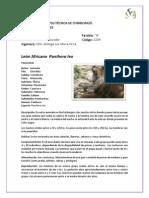 Animales (Alba Sinaluisa)