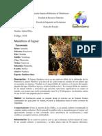 Animales (Gabriel Pilco)