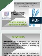 Cromosoma y Clasificacion Prepractica Oct2014 (1) (1)
