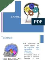 Clase 5 Encéfalo
