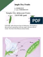 5 Plant Cells