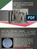 fisiopatologia infeccion por VPH