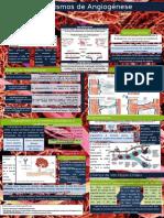 Mecanismos de Angiogénese