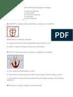 Exercícios Sistema Circulatório