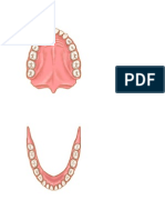 maxilares1