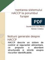 haccp-porumb