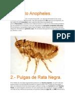 Insectos Mas Mortales