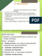 AP. Digestivo 2