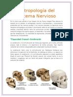 Antropología Del Sistema Nervioso
