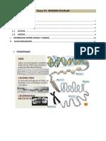 Tema 15  División Celular Mitosis y Meiosis.pdf
