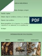 Abejasmeliferas