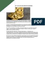Cientistas Ouro e Plantas
