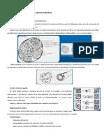 420-2014-03-20-26 Fisiopatologia del nervio periferico.pdf