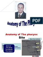 Anatomy Pharynx