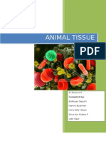 The Report of Animal Tissue Observation Result