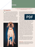 The Dog Genome