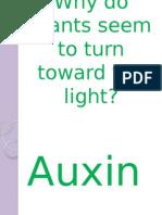 Why Do Plants Seem to Turn Toward The