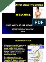 Development of Digestive System