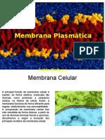 membrana-hoje-1219780898248115-8