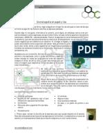 Cromatografía espinacas.pdf