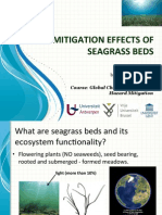 Mitigation Effect of Seagrass
