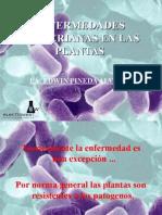 Enfermedades Bacterianas en Las Plantas