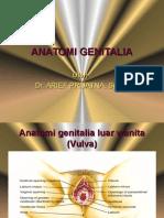 Anatomi Genitalia