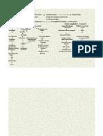 PATOFLOW Sirosis Hepatitis