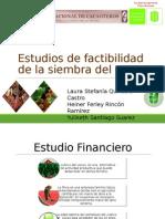 Analisis de Factibilidad Cultivo Cacao