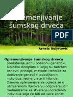 Oplemenjivanje šumskog drveća