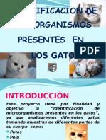 Microorganismos en El Gato