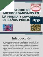 Microorganismos en Los Lavaderos y Manijas de Los SSHH de La Municipalidad