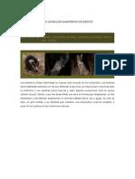 Los Animales Mamiferos de Mexico