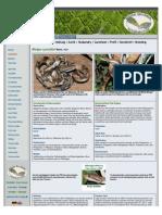 Boiga cynodon Care Sheet