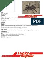 Brazilian Giant Blonde Tarantula Care Sheet