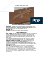 Care Sheet - Asiatic House Gecko (Hemidactylus frenatus)