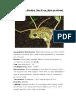 Care Sheet - Barking Frog (Hyla gratiosa)