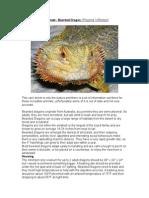 Care Sheet - Bearded Dragon