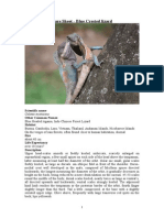 Care Sheet - Blue crested Lizard
