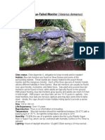 Care Sheet - Blue Tailed Monitor