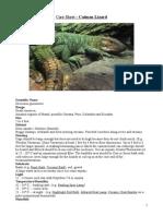 Care Sheet - Caiman Lizard