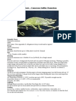 Care Sheet - Cameroon Sailfin Chameleon