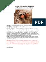 Care Sheet - Costa Rican Tiger Rump Tarantula
