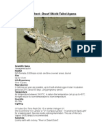 Care Sheet - Dwarf Shield -Tailed Agama