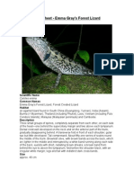 Care Sheet - Emma Gray's Forest Lizard