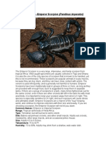 Care Sheet - Emperor Scorpion
