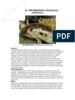 Care Sheet - Fat Tailed Gecko