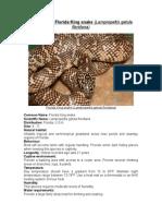 Care Sheet - Florida King Snake